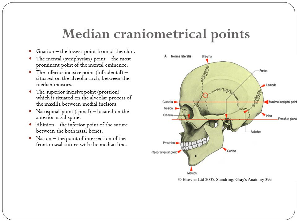 Median craniometrical points Gnation – the lowest point from of the chin.