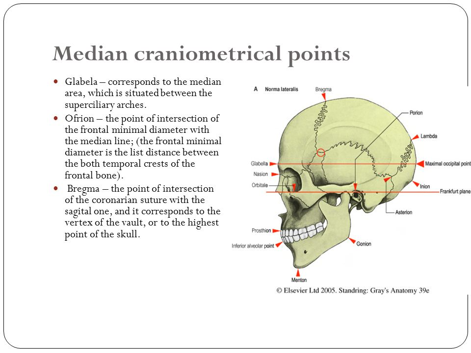 Median craniometrical points Glabela – corresponds to the median area, which is situated between the superciliary arches.