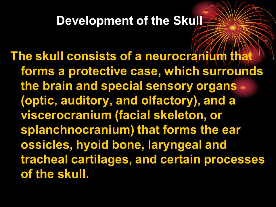 Development of the Skull The skull consists of a neurocranium that forms a protective case, which surrounds the brain and special sensory organs (optic, auditory, and olfactory), and a viscerocranium (facial skeleton, or splanchnocranium) that forms the ear ossicles, hyoid bone, laryngeal and tracheal cartilages, and certain processes of the skull.