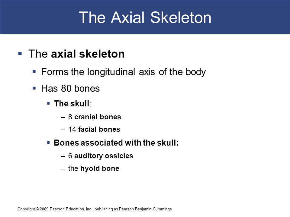 Copyright © 2009 Pearson Education, Inc., publishing as Pearson Benjamin Cummings The Axial Skeleton  The axial skeleton  Forms the longitudinal axis of the body  Has 80 bones  The skull: –8 cranial bones –14 facial bones  Bones associated with the skull: –6 auditory ossicles –the hyoid bone