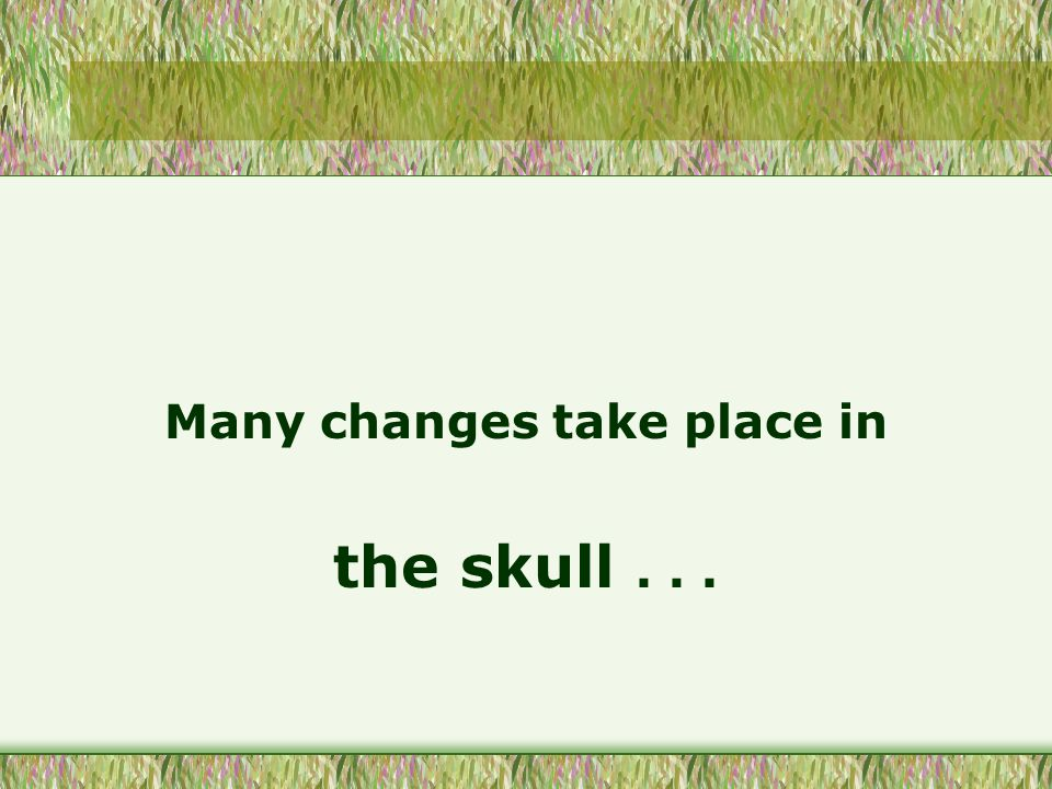 Many changes take place in the skull...