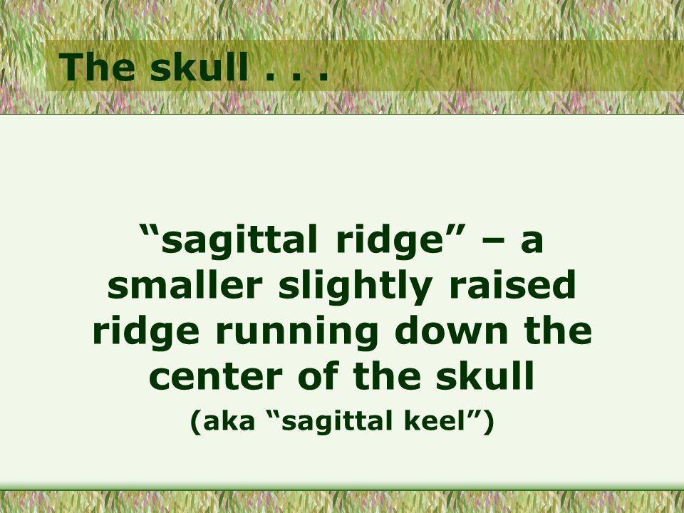 The skull...