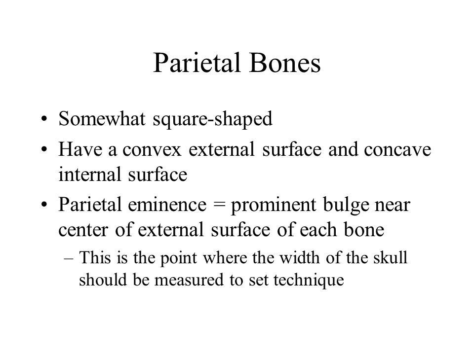 Parietal Bones Somewhat square-shaped Have a convex external surface and concave internal surface Parietal eminence = prominent bulge near center of e