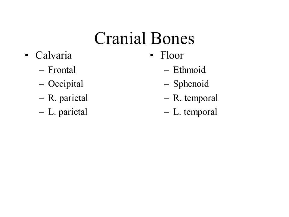 Cranial Bones Calvaria –Frontal –Occipital –R. parietal –L. parietal Floor –Ethmoid –Sphenoid –R. temporal –L. temporal