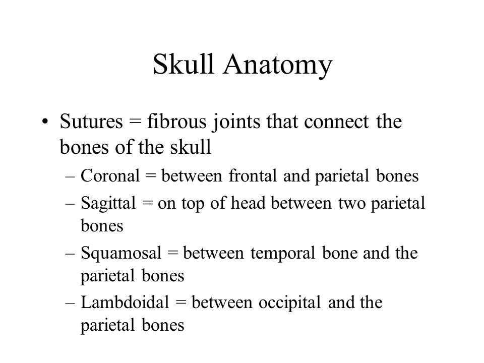 Skull Anatomy Sutures = fibrous joints that connect the bones of the skull –Coronal = between frontal and parietal bones –Sagittal = on top of head be