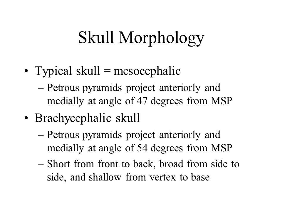Skull Morphology Typical skull = mesocephalic –Petrous pyramids project anteriorly and medially at angle of 47 degrees from MSP Brachycephalic skull –