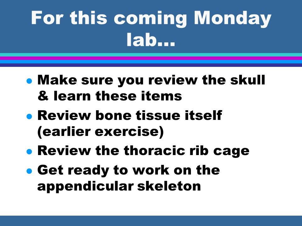 For this coming Monday lab... l Make sure you review the skull & learn these items l Review bone tissue itself (earlier exercise) l Review the thoraci