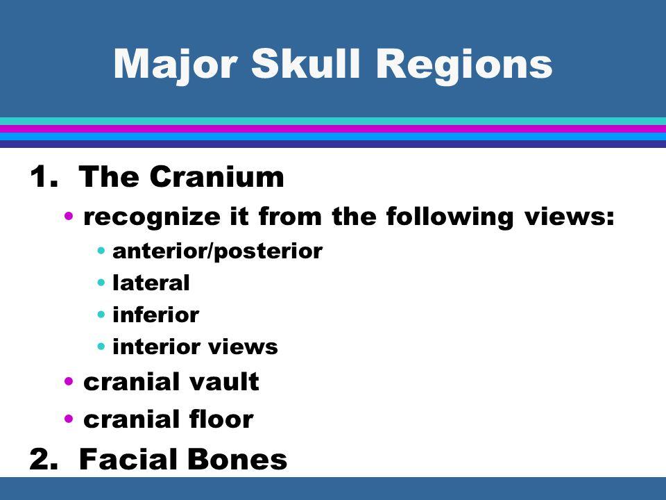 Major Skull Regions 1.