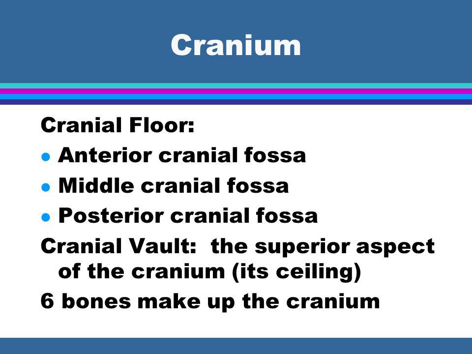 Cranium Cranial Floor: l Anterior cranial fossa l Middle cranial fossa l Posterior cranial fossa Cranial Vault: the superior aspect of the cranium (its ceiling) 6 bones make up the cranium