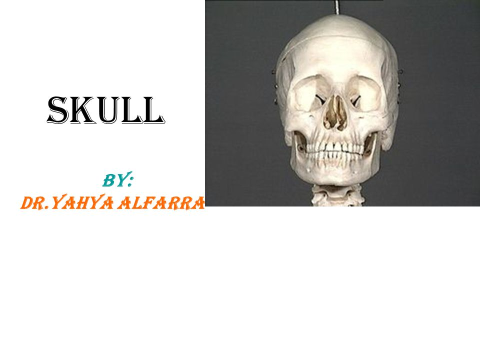 Skull Defenition:it is the skeleton of the head * The skull is composed of several separate bones united at immobile joints called sutures (line of fusion) note?.