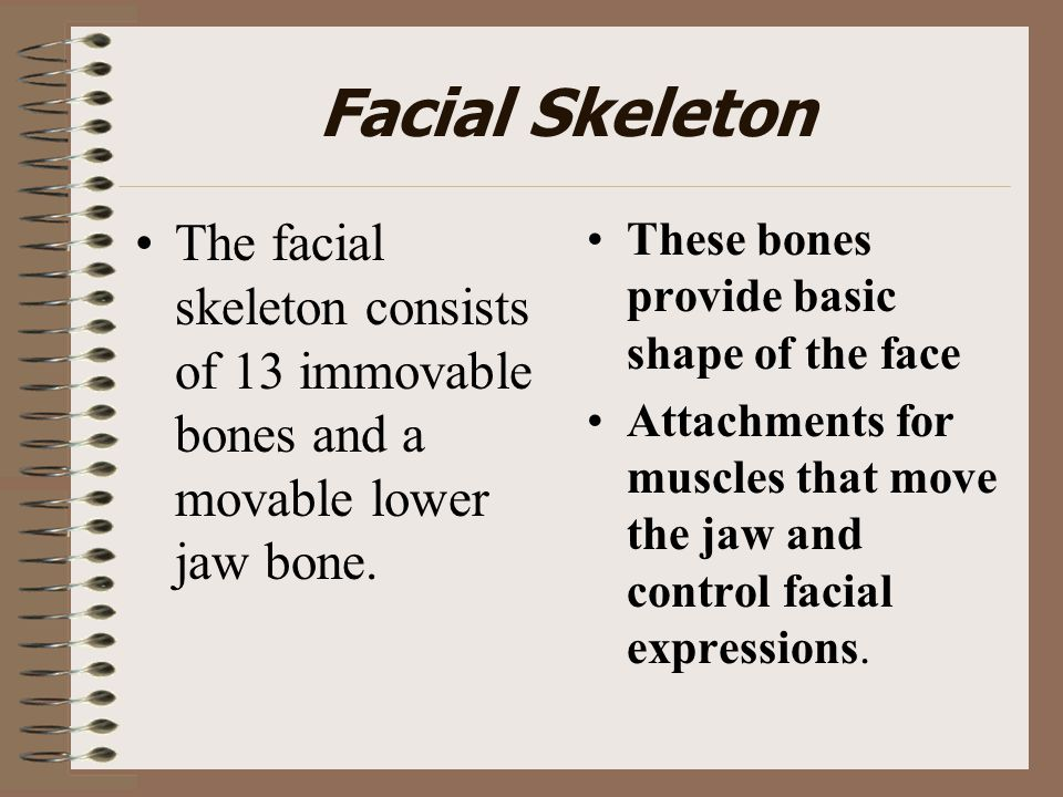 Facial Skeleton The facial skeleton consists of 13 immovable bones and a movable lower jaw bone. These bones provide basic shape of the face Attachmen
