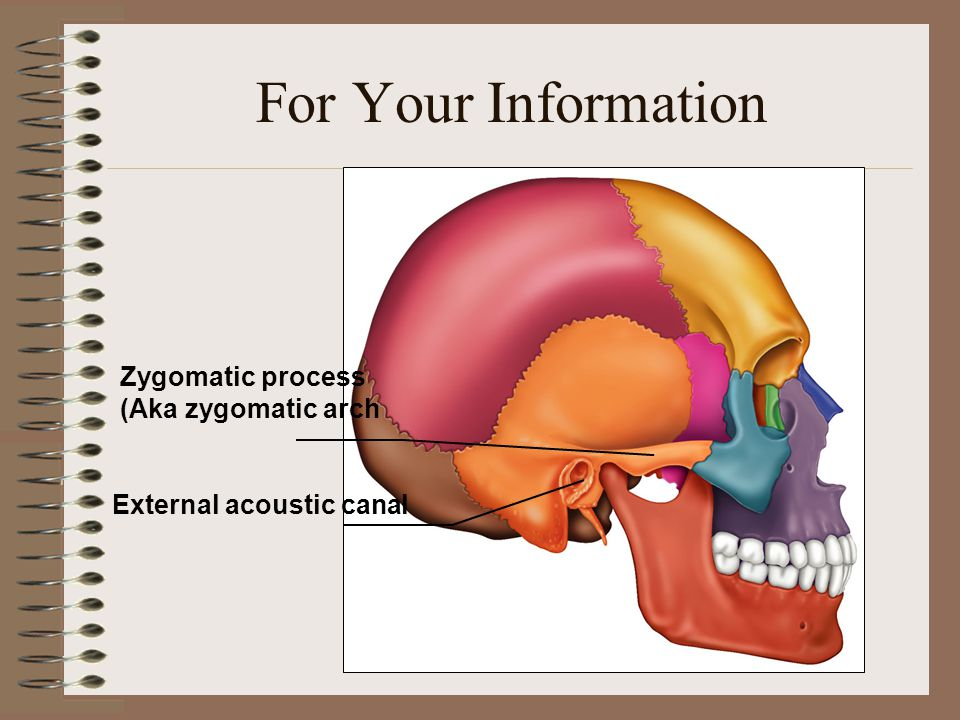 For Your Information Zygomatic process (Aka zygomatic arch External acoustic canal