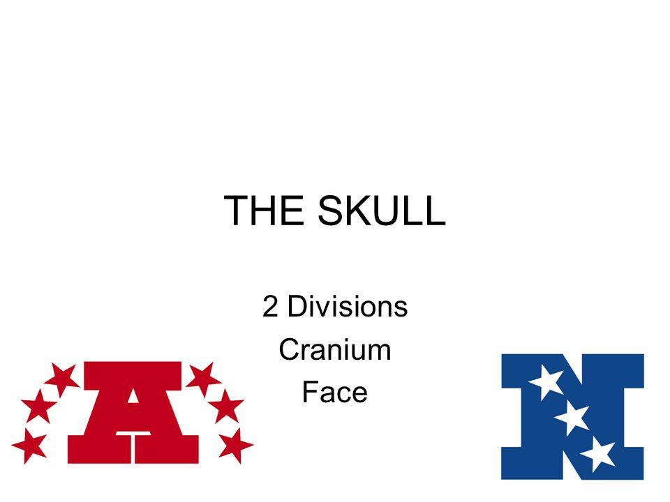 THE SKULL 2 Divisions Cranium Face