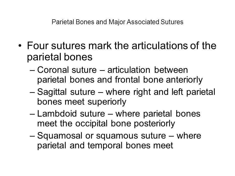 Parietal Bones and Major Associated Sutures Four sutures mark the articulations of the parietal bones –Coronal suture – articulation between parietal