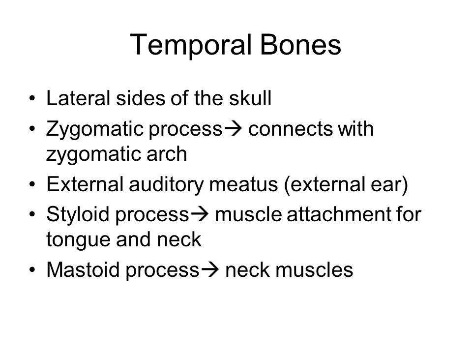 Temporal Bones Lateral sides of the skull Zygomatic process  connects with zygomatic arch External auditory meatus (external ear) Styloid process  m