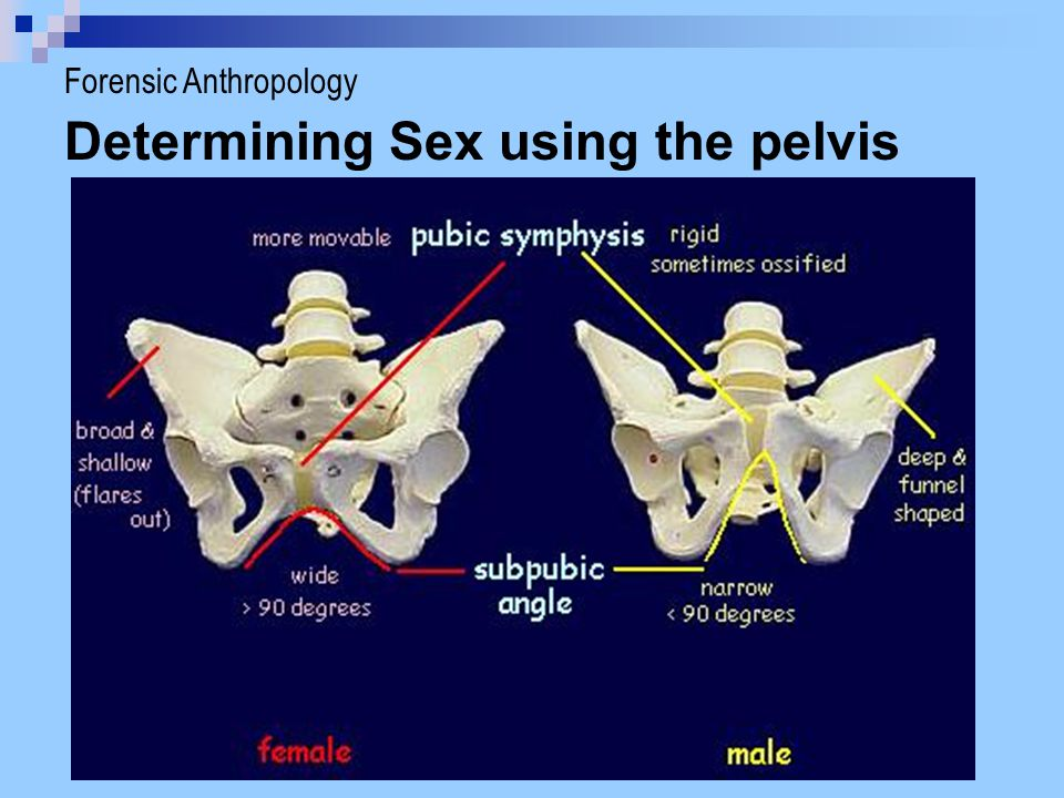 Determining Sex using the pelvis Forensic Anthropology