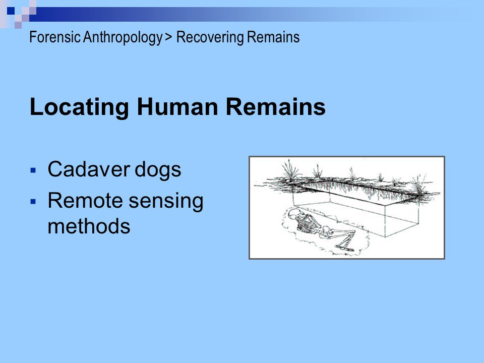  Find small bones or bone fragments  Recover clothing and trace materials associated with bones  Prevent damage of bones  Map the location of bones and maintain chain of custody Forensic Anthropology > Recovering Remains Anthropologists can help: