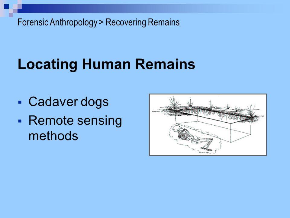 Caucasoid Forensic Anthropology