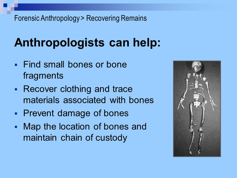 Identifying the remains Age - look at bone length and bone fusion Sex - differences in pelvis, skull, femur Stature - size of bones Ancestry - teeth, skull Forensic Anthropology