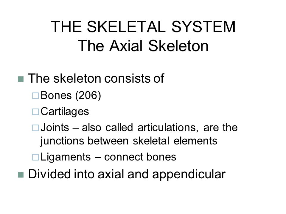 THE SKELETAL SYSTEM The Axial Skeleton The skeleton consists of  Bones (206)  Cartilages  Joints – also called articulations, are the junctions between skeletal elements  Ligaments – connect bones Divided into axial and appendicular