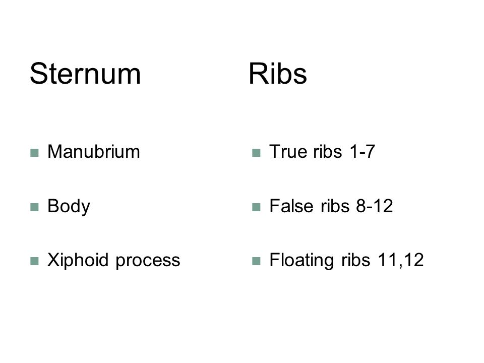 Sternum Ribs Manubrium Body Xiphoid process True ribs 1-7 False ribs 8-12 Floating ribs 11,12