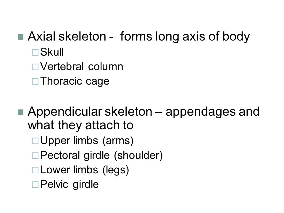 Axial skeleton - forms long axis of body  Skull  Vertebral column  Thoracic cage Appendicular skeleton – appendages and what they attach to  Upper limbs (arms)  Pectoral girdle (shoulder)  Lower limbs (legs)  Pelvic girdle
