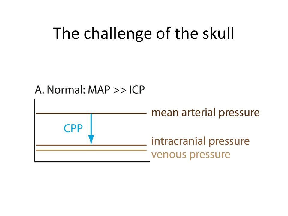 The challenge of the skull