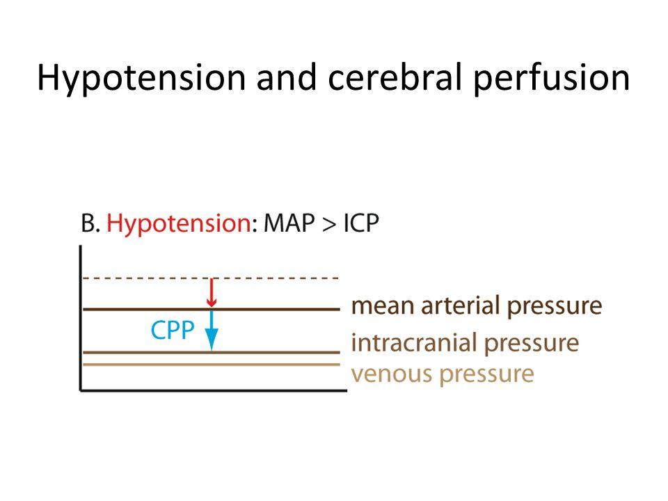 Blood supply to cerebral ventrum