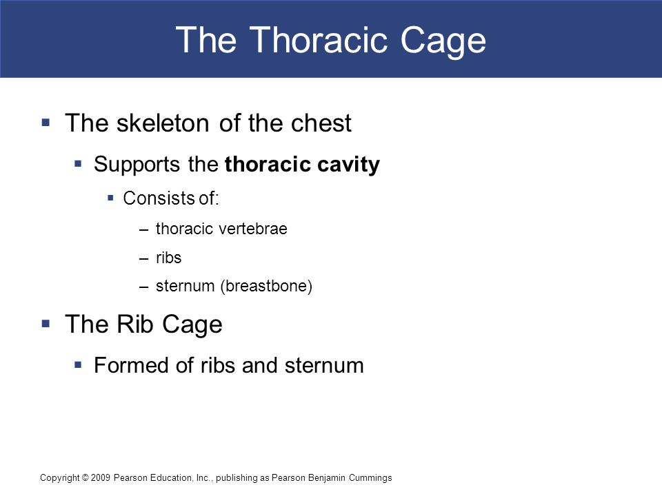Copyright © 2009 Pearson Education, Inc., publishing as Pearson Benjamin Cummings The Thoracic Cage  The skeleton of the chest  Supports the thoraci