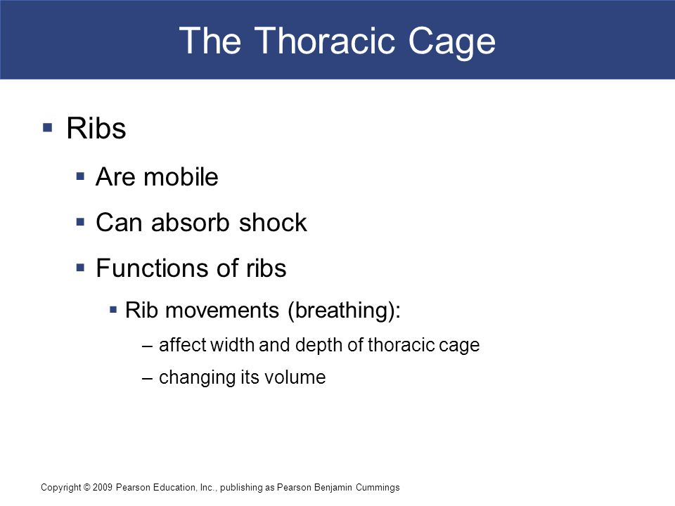Copyright © 2009 Pearson Education, Inc., publishing as Pearson Benjamin Cummings The Thoracic Cage  Ribs  Are mobile  Can absorb shock  Functions