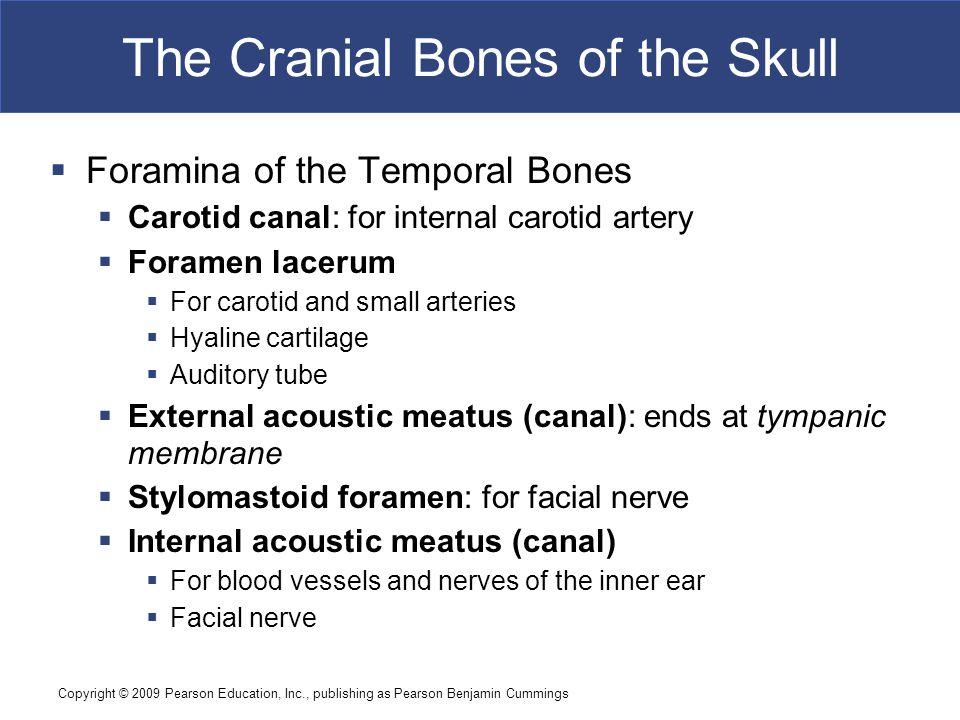 Copyright © 2009 Pearson Education, Inc., publishing as Pearson Benjamin Cummings The Cranial Bones of the Skull  Foramina of the Temporal Bones  Ca