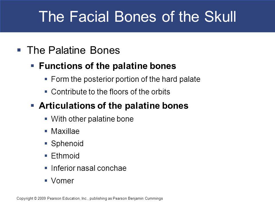 Copyright © 2009 Pearson Education, Inc., publishing as Pearson Benjamin Cummings The Facial Bones of the Skull  The Palatine Bones  Functions of th