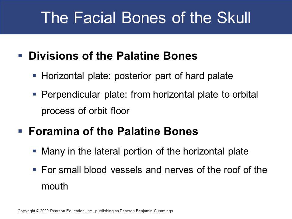 Copyright © 2009 Pearson Education, Inc., publishing as Pearson Benjamin Cummings The Facial Bones of the Skull  Divisions of the Palatine Bones  Ho