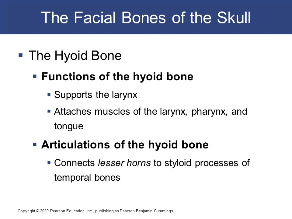 Copyright © 2009 Pearson Education, Inc., publishing as Pearson Benjamin Cummings The Facial Bones of the Skull  The Hyoid Bone  Functions of the hy