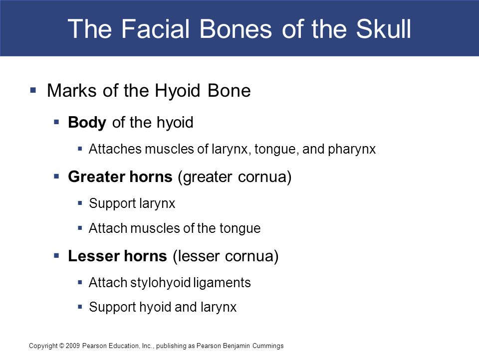 Copyright © 2009 Pearson Education, Inc., publishing as Pearson Benjamin Cummings The Facial Bones of the Skull  Marks of the Hyoid Bone  Body of th