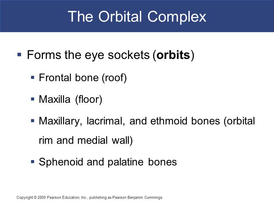 Copyright © 2009 Pearson Education, Inc., publishing as Pearson Benjamin Cummings The Orbital Complex  Forms the eye sockets (orbits)  Frontal bone