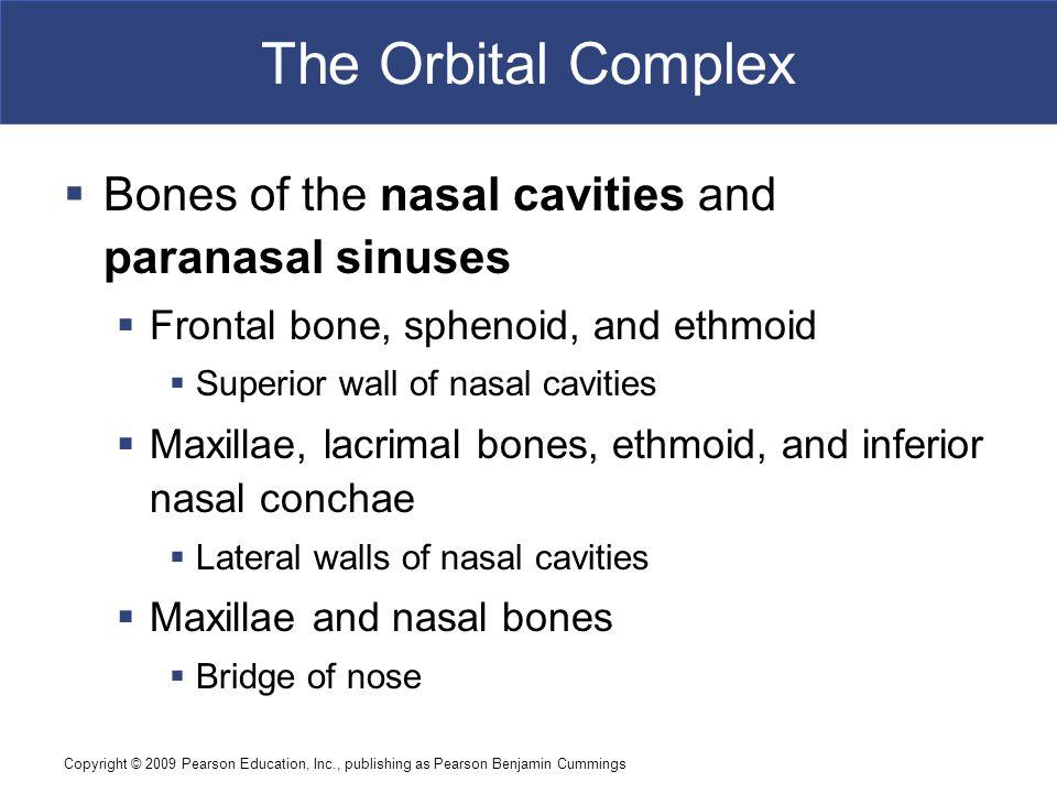 Copyright © 2009 Pearson Education, Inc., publishing as Pearson Benjamin Cummings The Orbital Complex  Bones of the nasal cavities and paranasal sinu