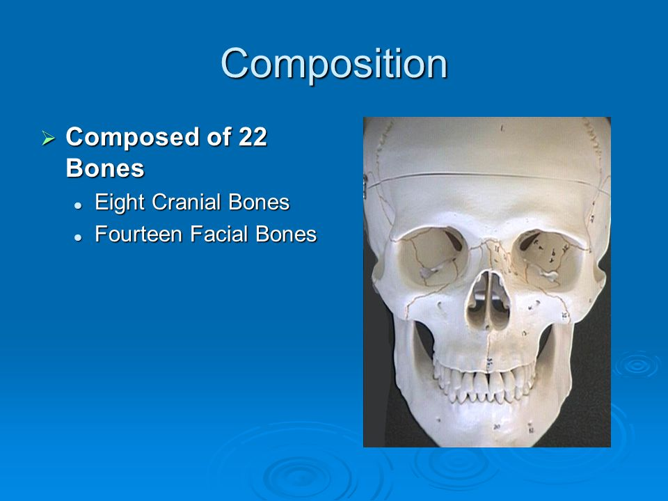 Composition  Composed of 22 Bones Eight Cranial Bones Eight Cranial Bones Fourteen Facial Bones Fourteen Facial Bones