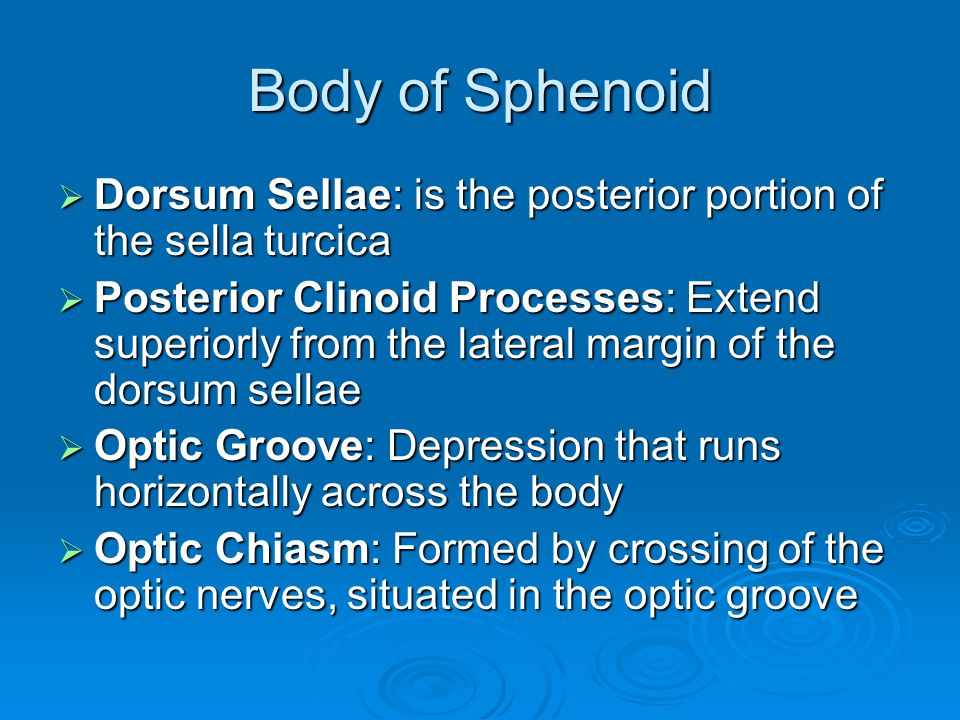 Body of Sphenoid  Dorsum Sellae: is the posterior portion of the sella turcica  Posterior Clinoid Processes: Extend superiorly from the lateral marg