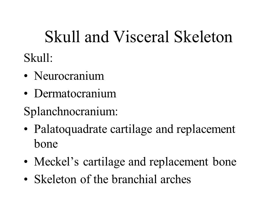 Skull and Visceral Skeleton Skull: Neurocranium Dermatocranium Splanchnocranium: Palatoquadrate cartilage and replacement bone Meckel's cartilage and replacement bone Skeleton of the branchial arches