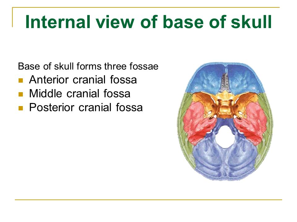 Internal view of base of skull Base of skull forms three fossae Anterior cranial fossa Middle cranial fossa Posterior cranial fossa