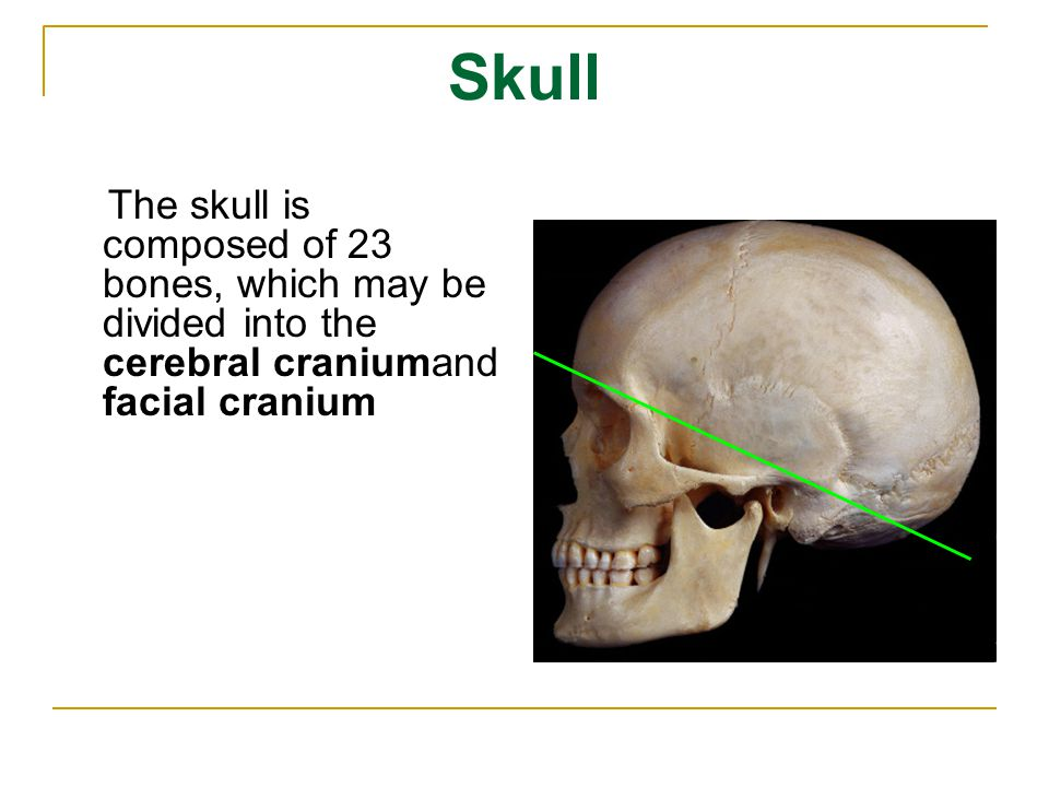 Skull The skull is composed of 23 bones, which may be divided into the cerebral craniumand facial cranium