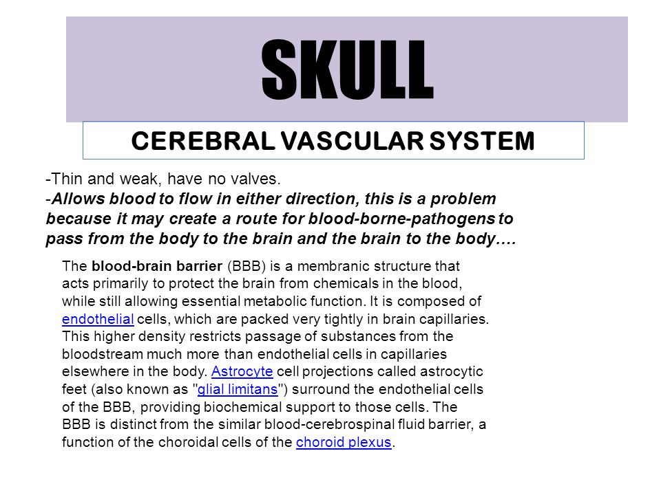 SKULL CEREBRAL VASCULAR SYSTEM -Thin and weak, have no valves. -Allows blood to flow in either direction, this is a problem because it may create a ro