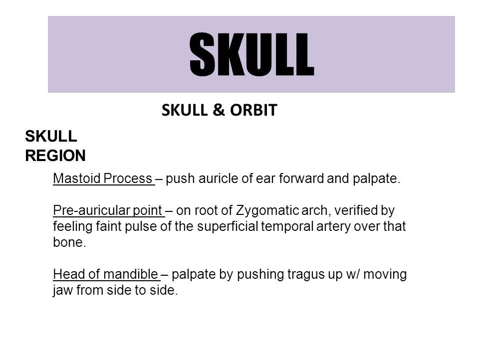 SKULL SKULL & ORBIT SKULL REGION Mastoid Process – push auricle of ear forward and palpate. Pre-auricular point – on root of Zygomatic arch, verified
