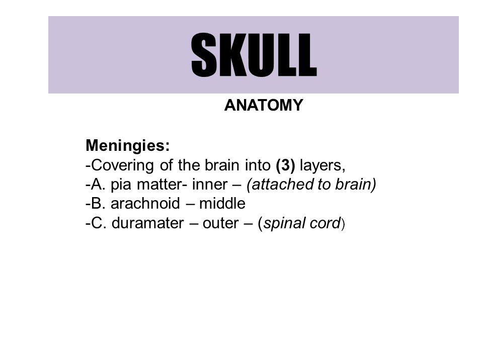 SKULL ANATOMY Meningies: -Covering of the brain into (3) layers, -A.