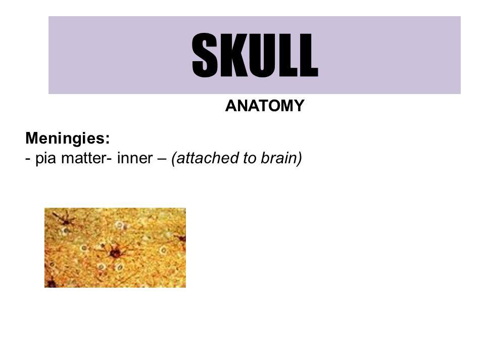 SKULL ANATOMY Meningies: - pia matter- inner – (attached to brain)