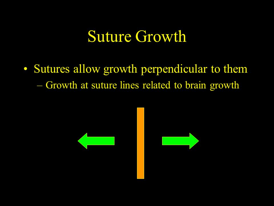 Suture Growth Sutures allow growth perpendicular to them –Growth at suture lines related to brain growth