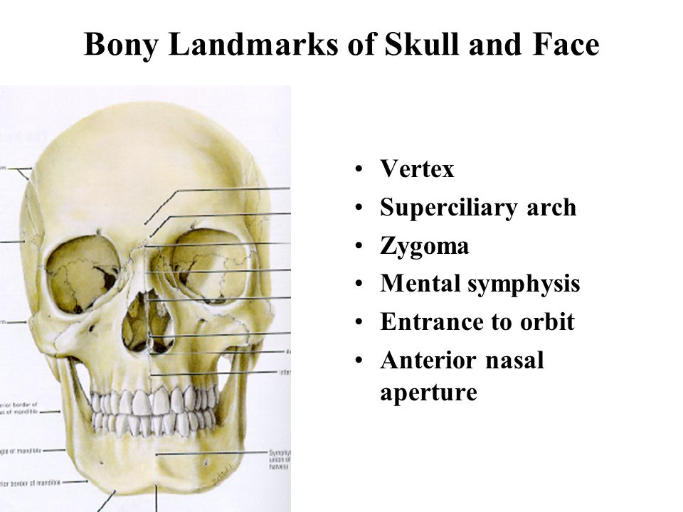 Skull and Face Boonsirm Withyachumnarnkul, M.D., Ph.D. Department of Anatomy, Faculty of Science Mahidol University