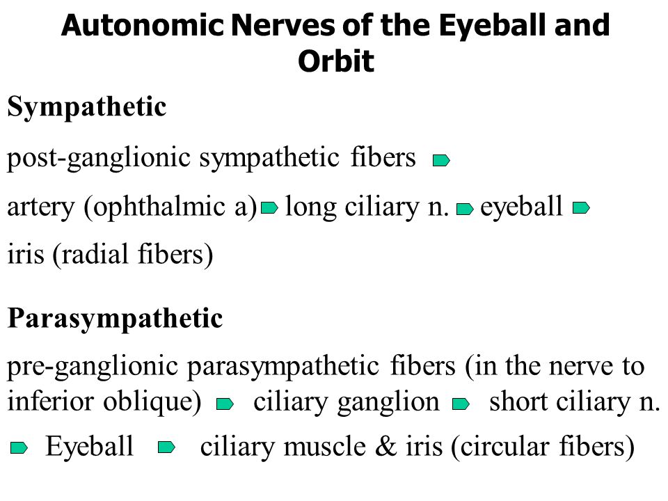 Sensory Nerves of the Eyeball and Orbit frontal supraorbital supratrochlear lacrimal nerve nasociliary nerve anterior ethmoidal posterior ethmoidal in