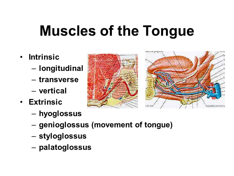 The Tongue sulcus terminalis foramen caecum papillae –circumvallate –fungiform –filiform –foliform lingual tonsil